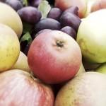 Garden Fruits